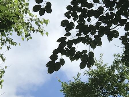 木の葉.JPG